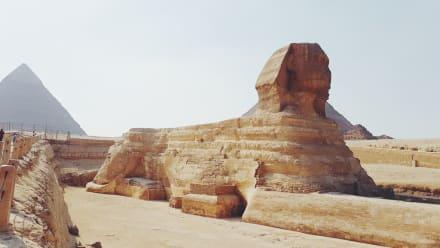Kairo Sphynx  - Sphinx von Gizeh