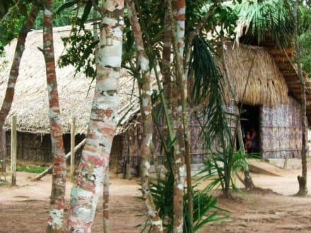 Praia Tupé - Indianisches Versammlungshaus - Praia do Tupé
