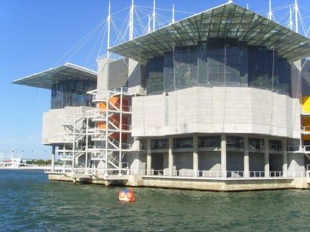 Aquarium von Lissabon - Oceanário de Lisboa