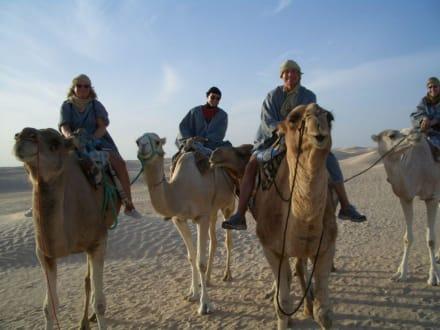 Mit 1PS durch die Sahara - Kamelreiten Sousse