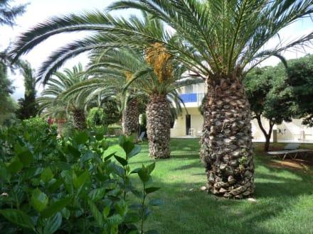 garten mit palmen bild hotel cretan malia park in malia. Black Bedroom Furniture Sets. Home Design Ideas