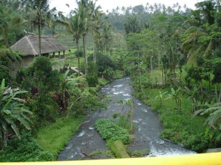 Fluss in Bali - Tour & Ausflug