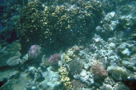 Unterwasser - Schnorcheln Hurghada