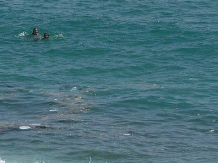 Kloake Mittelmeer - Strand Kleopatra/Strand Damlatasch