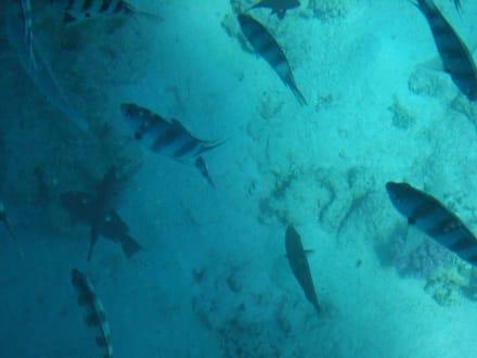 Bei der Glasbootfahrt - Glasbodenboot Tour Hurghada