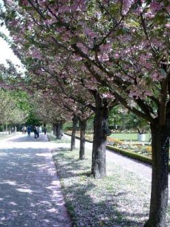 Frühling im Hofgarten der Residenz - Residenz Würzburg