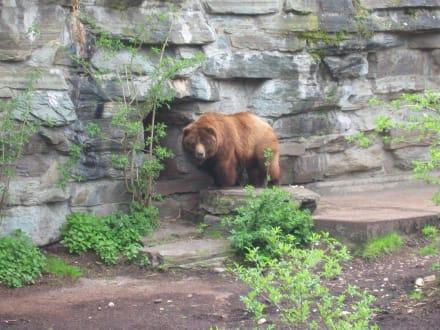 Bär - Zoologischer Garten Köln