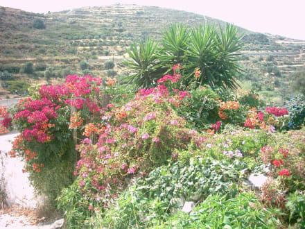 Frühsommer auf Naxos - Hinterland von Naxos