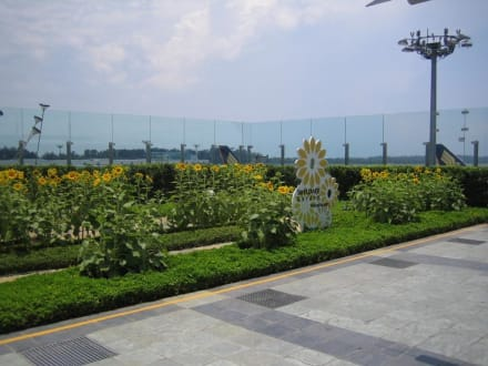 Sonnenblumengarten - Flughafen Singapur Changi (SIN)