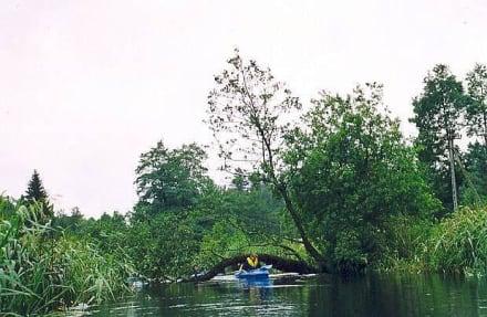 Bäume im Wasser - Czarna Hańcza