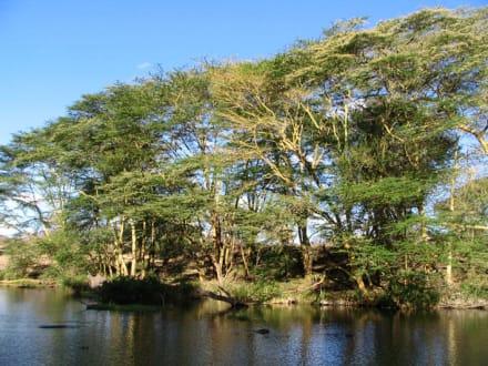 Mzima Springs - Mzima Springs