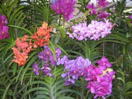 Verschiedene Orchideensorten. - Orchideenfarmen