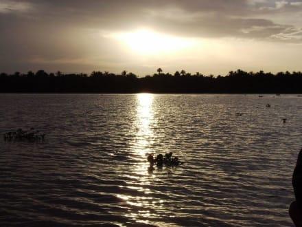 Sonnenuntergang über dem Orinocco Delta - Orinoco Delta