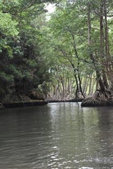 Mangroven - RH Tours Ausflüge Punta Cana