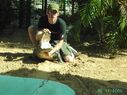 Krokodil Show - Oasis Park