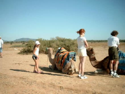 Kamel Tour - Kamelreiten Hammamet