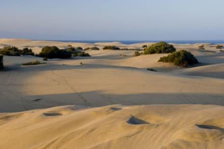 Dünen von Playa del Ingles Gran Canaria 01 - Dünen von Maspalomas