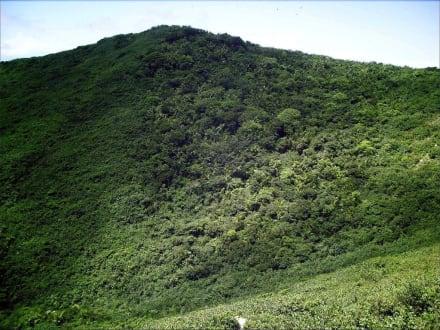 Nationalpark Cerro El Copey auf dem Berg - Nationalpark Cerro El Copey