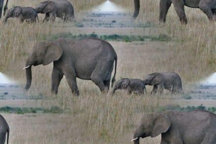 Bearbeitetes Bild - Masai Mara Safari