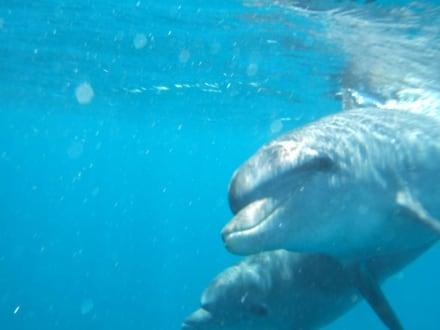 Delfine erleben - SimSim-Reisen