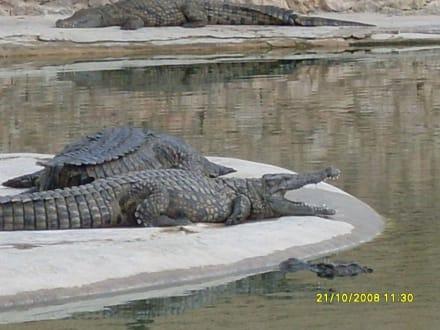 Krokodilpark - Djerba Explore Parc