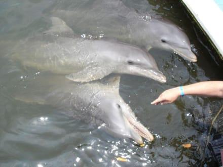 Delphine zum Anfassen - Delfinarium Varadero