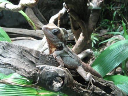 Lizard - Wildlife World