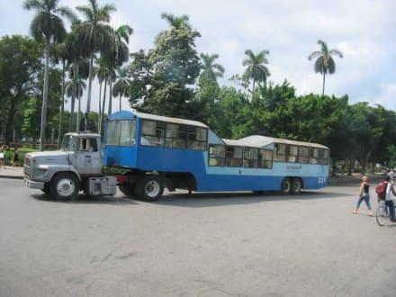 Bus in Havanna - Los Camellos