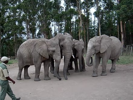Elefanen-Meeting mit Führer - Knynsa Elephant Park