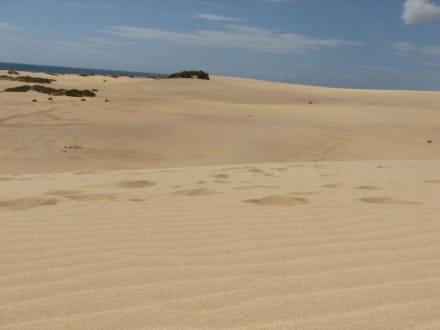 Wanderdünen - Naturpark Dünen von Corralejo