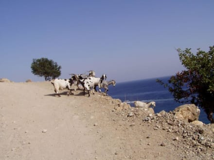 Akamas - Wandern Latsi