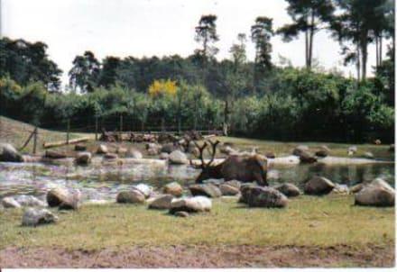 Im Freigehege - Serengeti Park