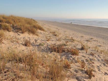 Dünen und Strand - Strand Costa da Caparica