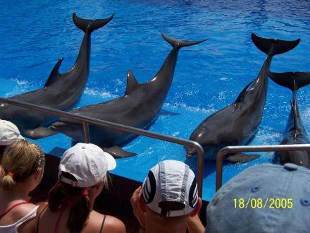 Delphinshow - Marineland