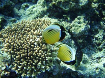 Noch schönes Riff - Tauchen Hurghada