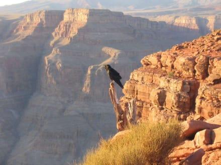 Vogel vor schöner Kulisse - Grand Canyon