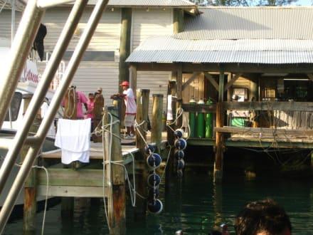 Beach/Coast/Harbor - Stuart Cove Dive Center