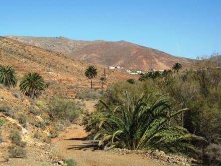 Bei la Vega de Rio Palma - Vega de Rio Palmas