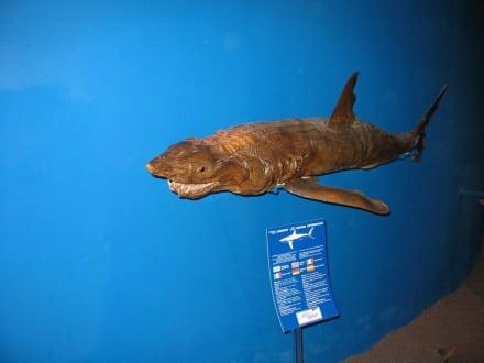 Exponat - Meerwasseraquarium