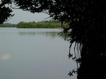 Stille Lagune bei Balapitiya - Ayurveda