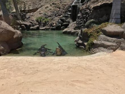 Krokodile - Oasis Park