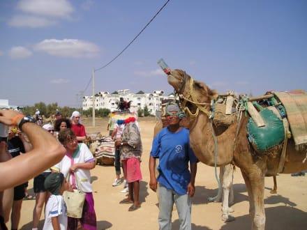 Cola trinkendes Kamel (Tunesische Wüste) - Kamelreiten Port El-Kantaoui