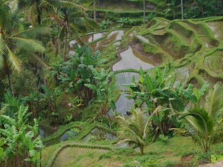 Unbeschreiblich grün - Reisterrassen