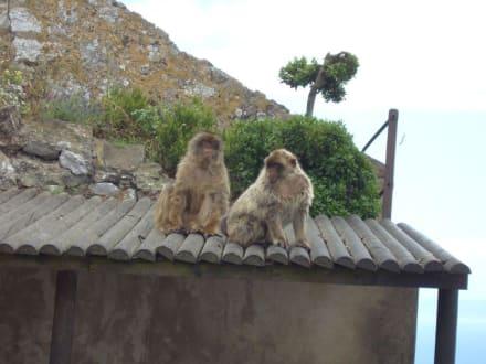Affen - Affenfelsen und St. Michael's Cave