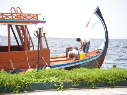Delfinfahrt - Delfin Tour Süd-Malé-Atoll