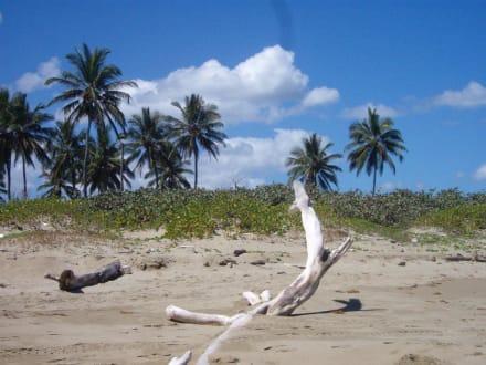 Strandspaziergang 2 - Playa Camino