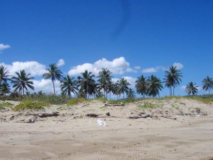 Strandspaziergang 1 - Playa Camino