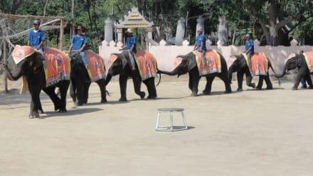 Elephantshow - Hua Hin Safari & Adventure Park