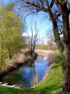 Im Biotop - Landschaft bei Moos