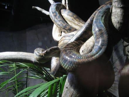 Schlange - Wildlife World